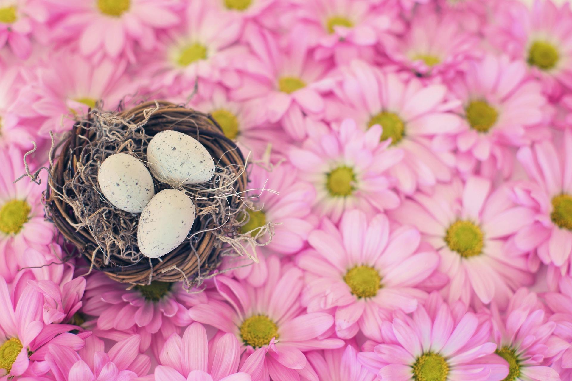 new life, birds nest