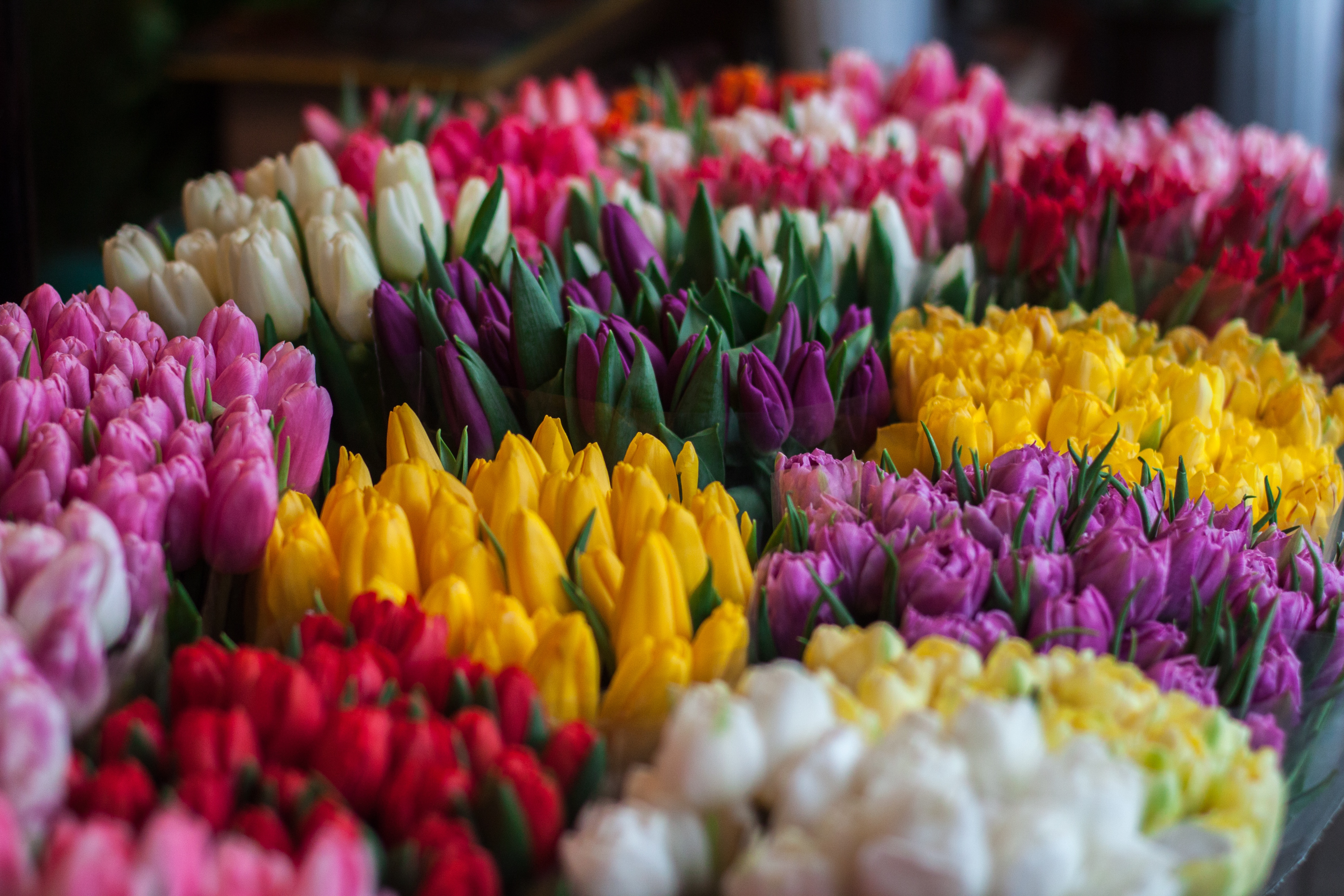 easter flowers, StockSnap_RIK0OYXSWU.jpg