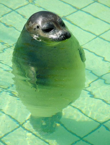 Cute chubby seal - Amusing Twitter Bios