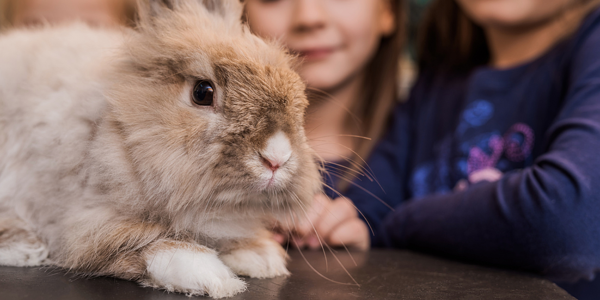 Managing small pets for children