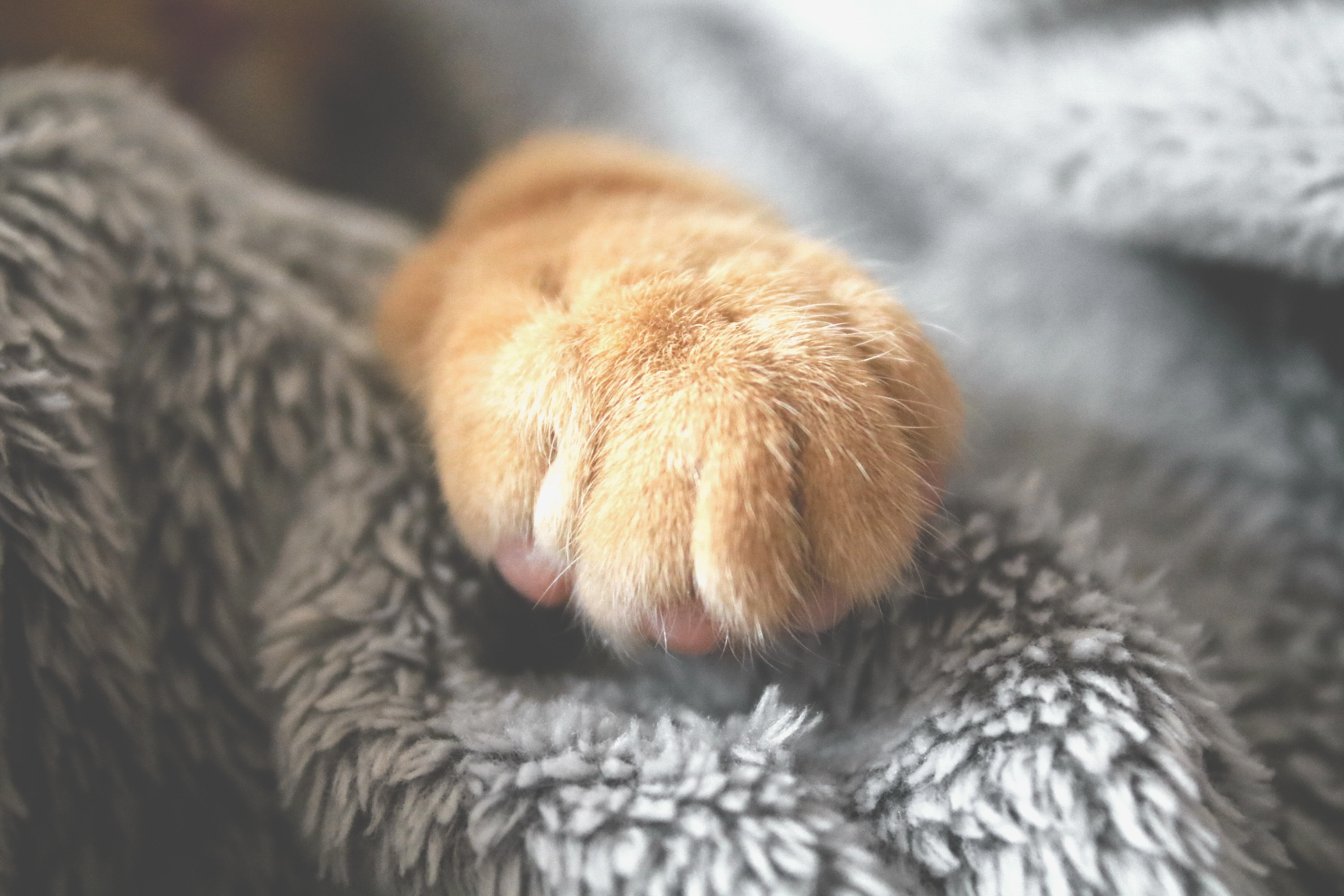 New cat checklist - getting ready for the introduction of your cat