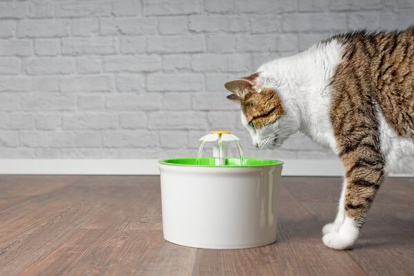 The most useful cat feeding accessories