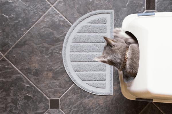 Cat Litter: Is clumping or non-clumping litter better?