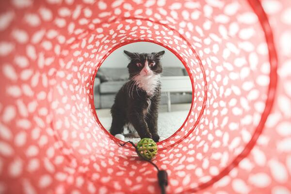 4 types of toys to keep your cat endlessly entertained