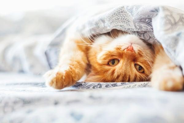 Key differences between pet and human senses