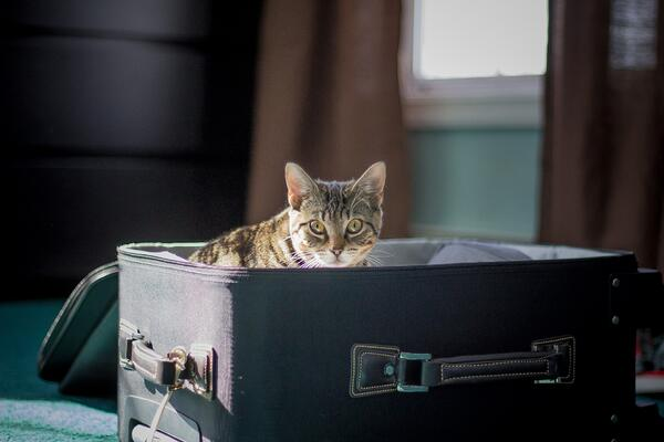 How to prepare for travel without your pet