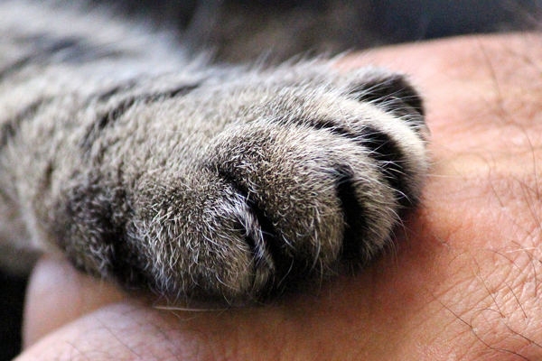 Tips for bonding and forming a friendship with your cat