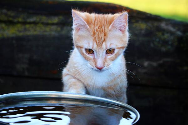 Tips for keeping your pet hydrated