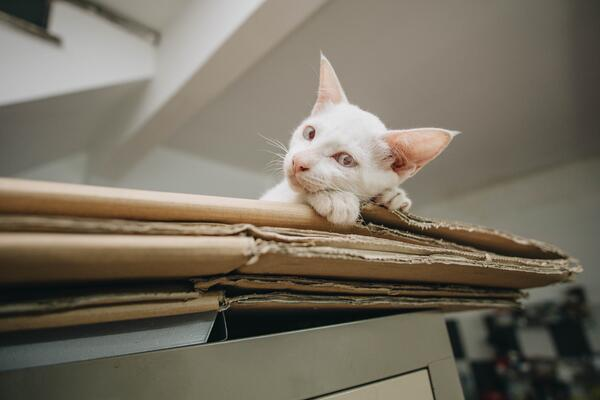 Tips for looking after your pet when moving house
