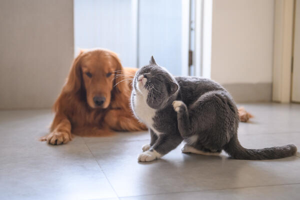 How to stop fleas and relieve your pet's flea allergy