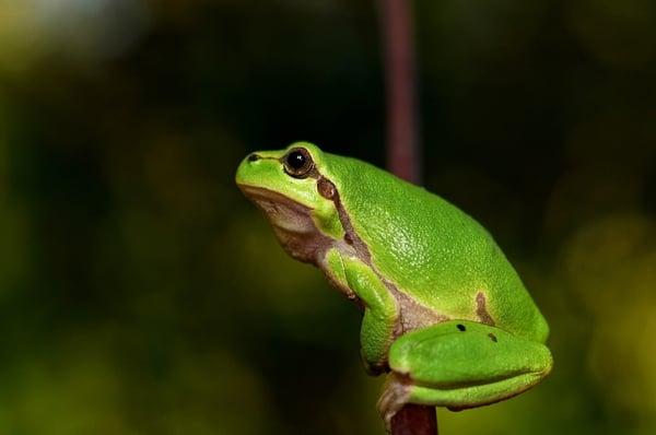 New tadpoles & frogs checklist