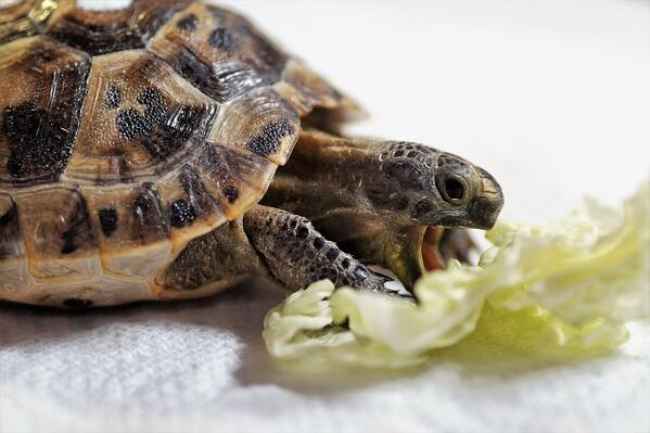The slow down on turtle & tortoise care