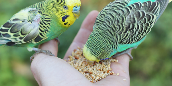 What should you be feeding your bird?