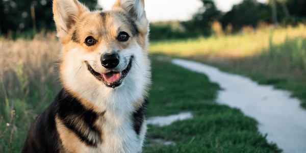 Top 10 dog-friendly outdoor walks around NZ