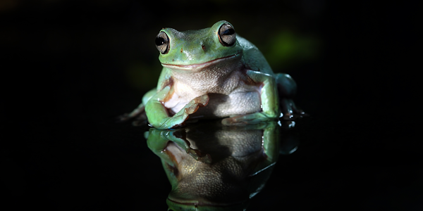 Everything you need to know about frog care