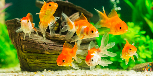 How to safely add fish to your aquarium