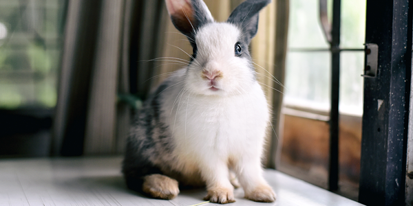 How to ensure your rabbit lives a happy and healthy life
