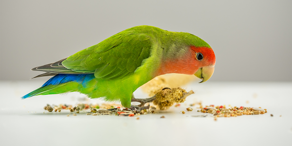 Tips for choosing the best bird treats