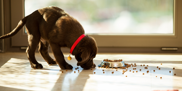 Tips for socialising your puppy during the lock-down