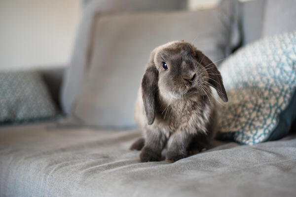 Clicker training with your rabbit