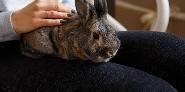 Everything you need to know before bringing a pet rabbit home