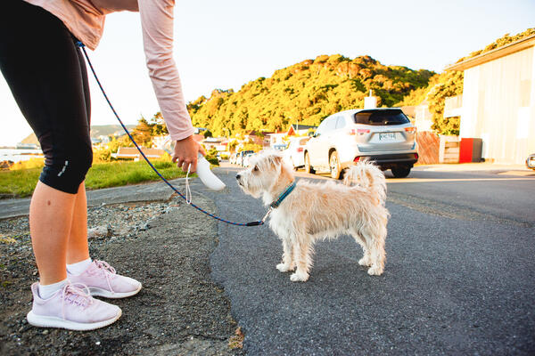 A guide to kiwi innovative pet products