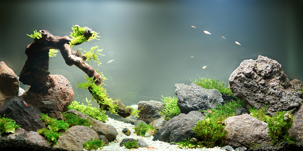 A guide to decorating your fish tank