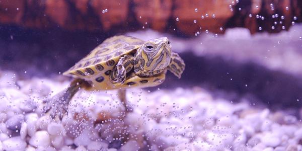 New turtle checklist