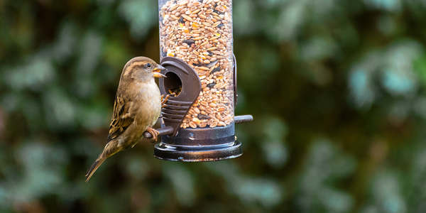 Attracting wild birds to your garden