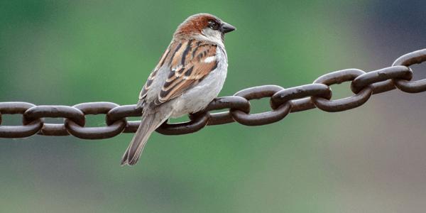 How to identify common New Zealand backyard birds