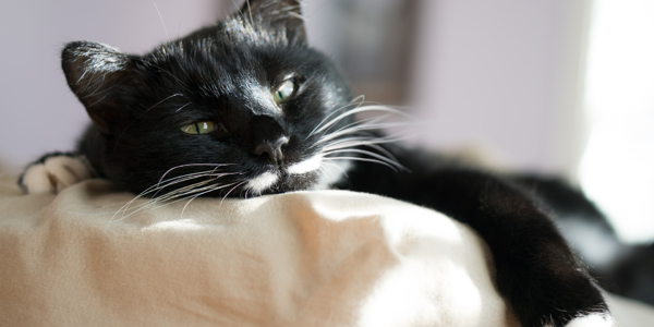 How to choose a bed that your cat will love