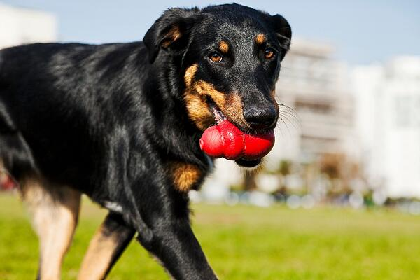 The best enrichment toys to challenge & stimulate your dog