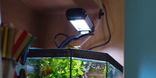Understanding aquarium lighting systems