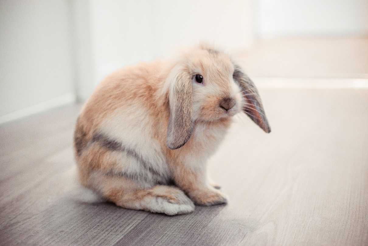 The essential health products for pet rabbits
