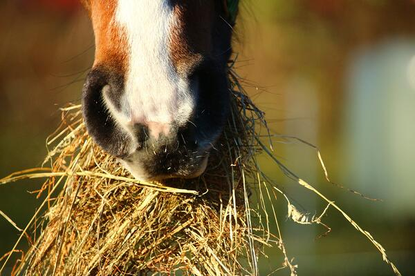 Feeding your horse: what you need to know