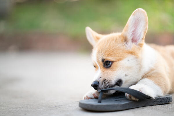 Tips to stop your puppy from chewing everything