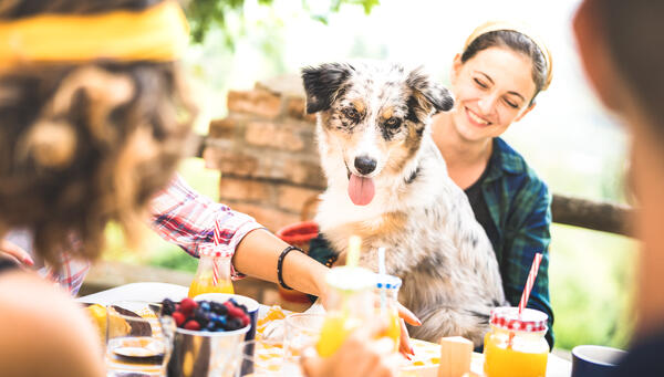 15 of New Zealand's best dog friendly events