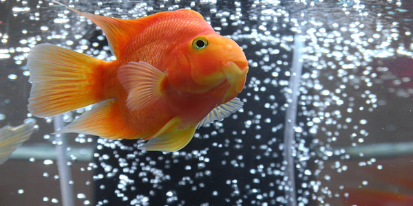 Does your fish tank need an air pump?