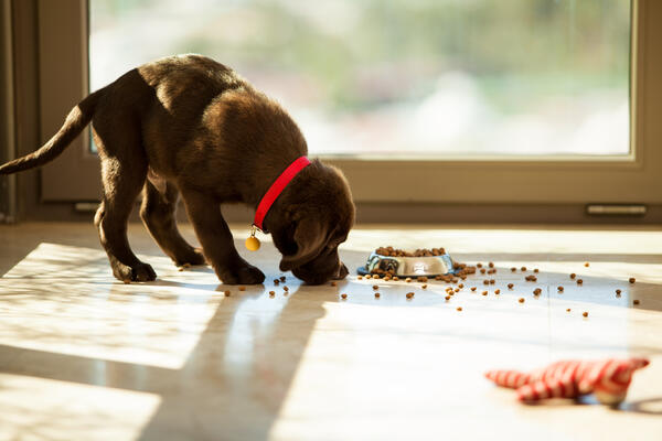 Choosing the best food for your puppy