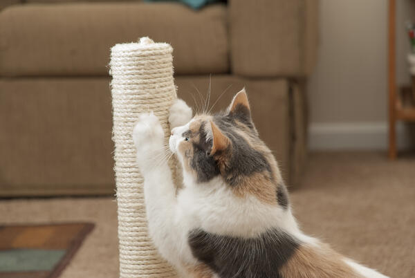 How to choose a scratching post for your cat