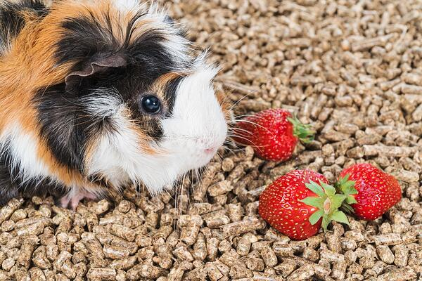 What treats can I give to my small pet?