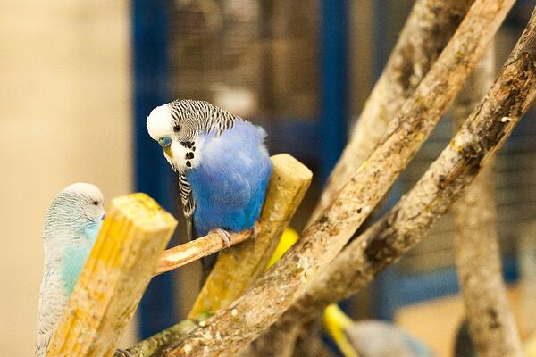 How to help your bird get more exercise