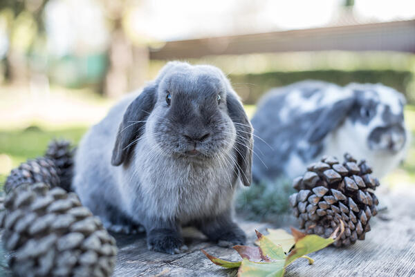 How to make DIY toys for your rabbit
