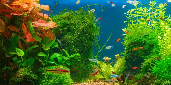 How to set up a planted aquarium