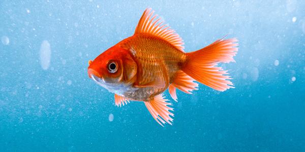 How to improve water clarity in your aquarium