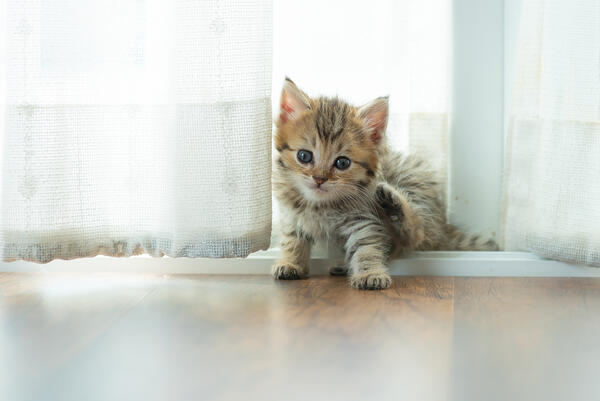 Welcoming a new kitten into your home