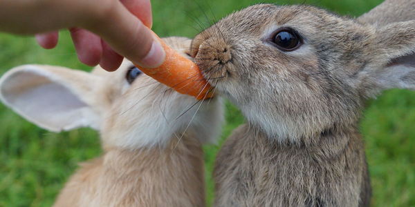 It's crunch time! What should you be feeding your rabbit?