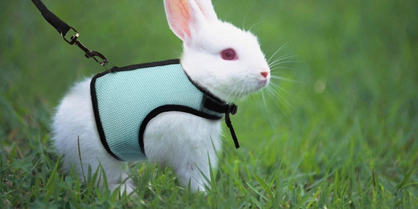 A guide to travelling with your rabbit