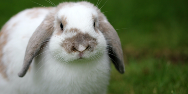 How to do a health check on your rabbit