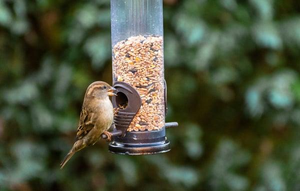 Attracting wild birds to your garden